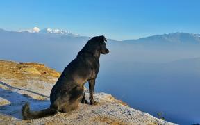 pet-traveling